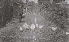 bentons_chickens-001.jpg